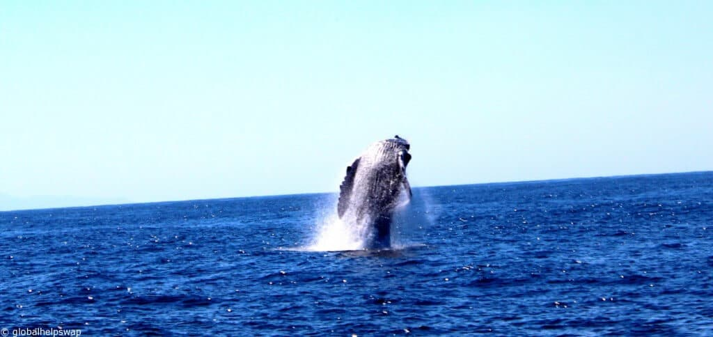 Whale watching in Mexico