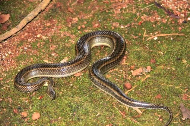 Bitten by a snake