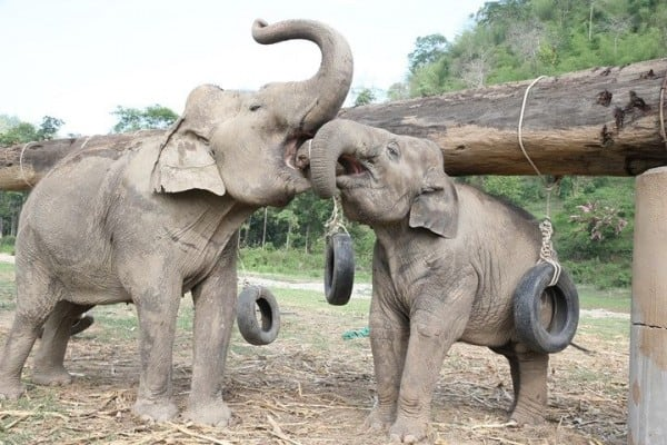 Elephant Rides in Thailand