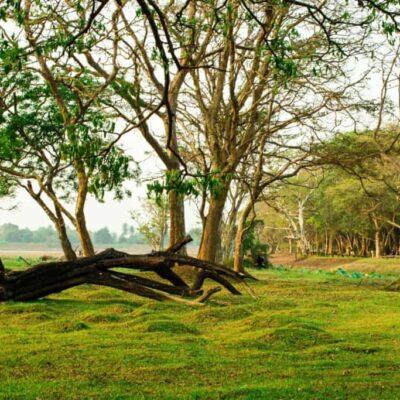 Green Sri Lanka: Cinnamon Lodge, Habarana
