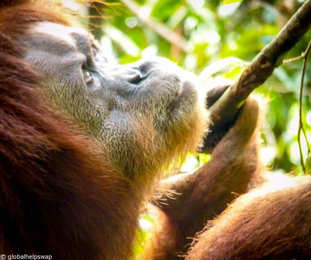 Gunung Leuser National Park