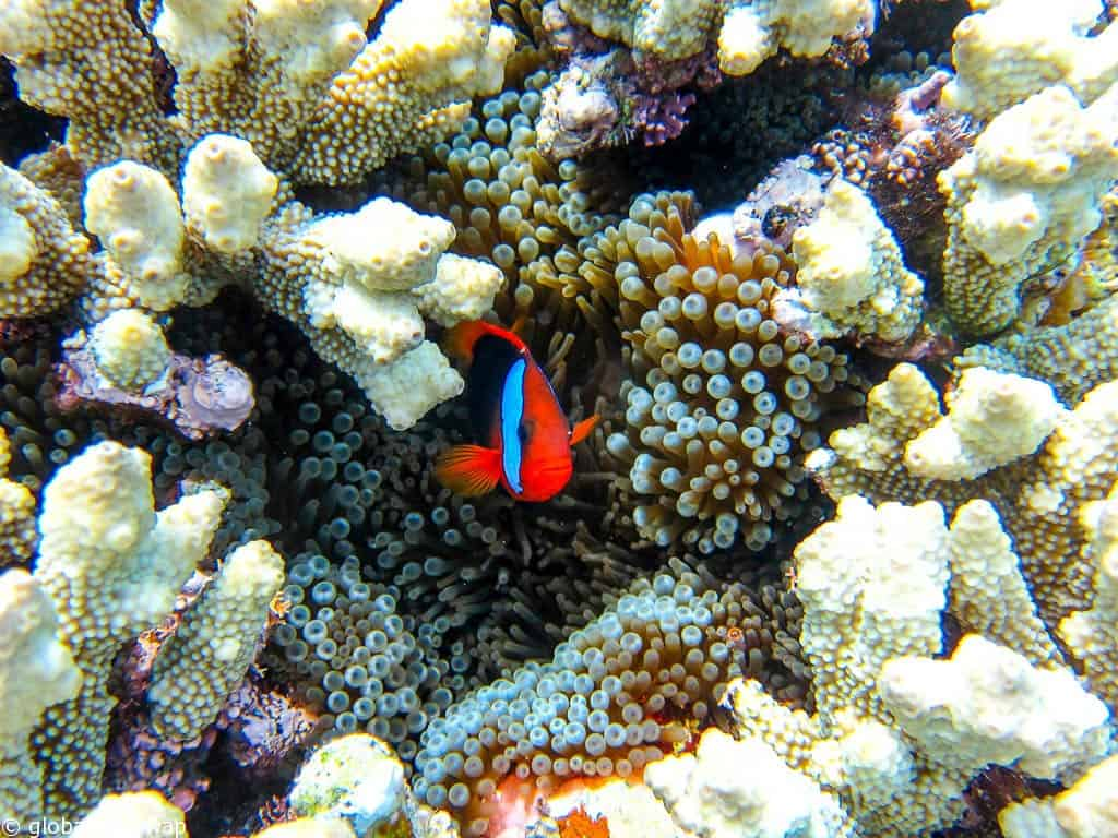 How to scuba dive the Great Barrier Reef and avoid the crowds