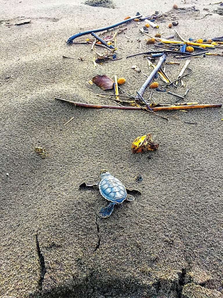 The Best Beach To See Turtles In Costa Rica