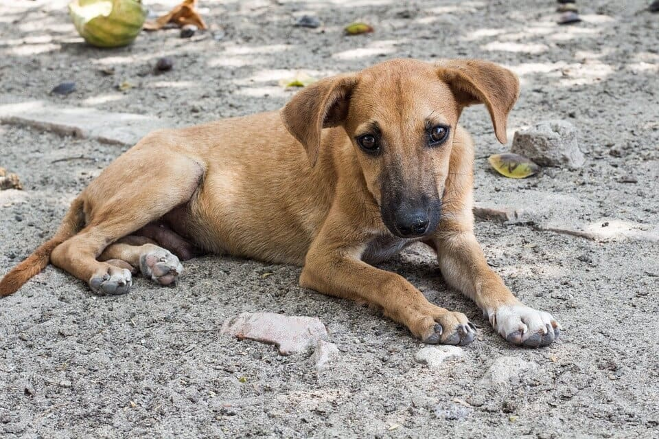 Amazing Places To Volunteer With Animals Abroad | globalhelpswap