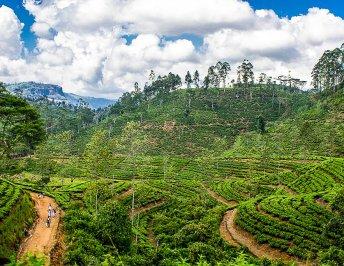 Ella Sri Lanka | 8 Unmissable things to do in Ella Sri Lanka