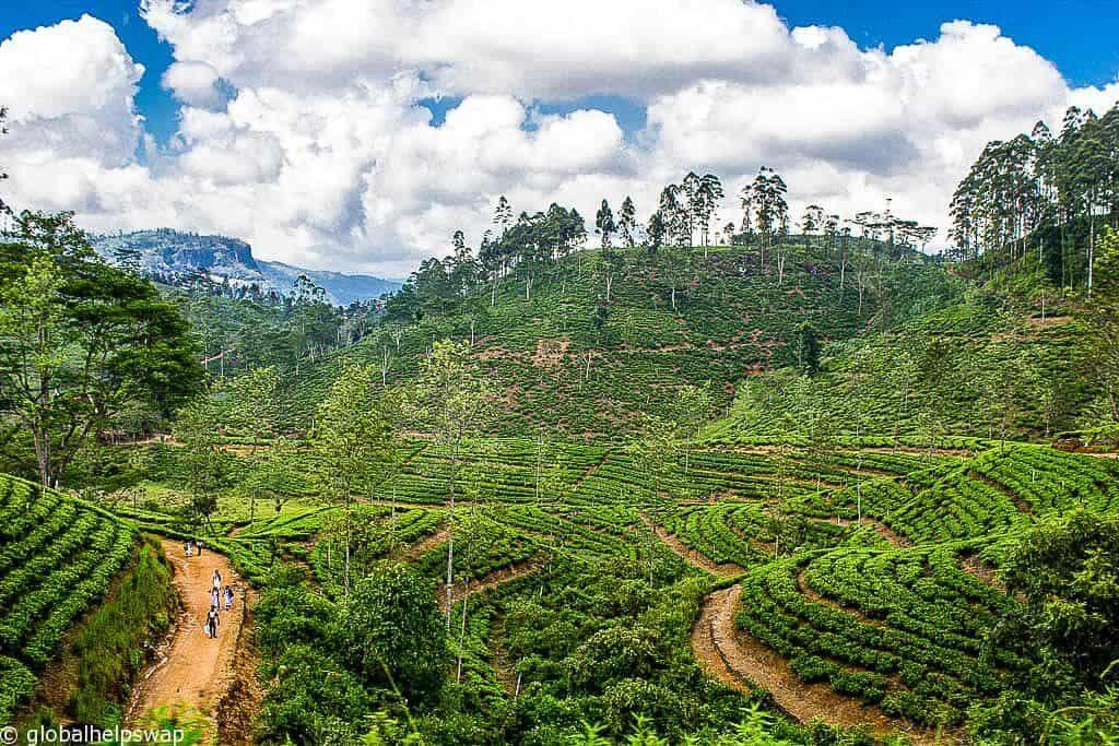 Ella Sri Lanka 8 Fantastic Things To Do In Ella Ghs Travel Blog