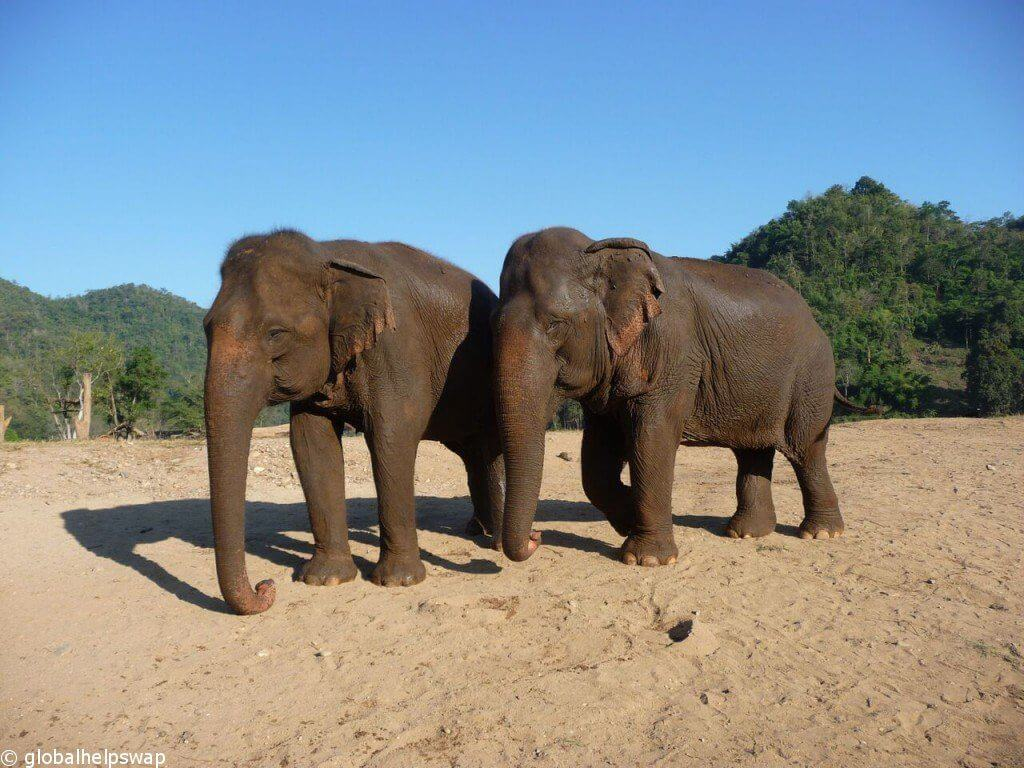 Elephant Nature Park Thailand : The best place to volunteer