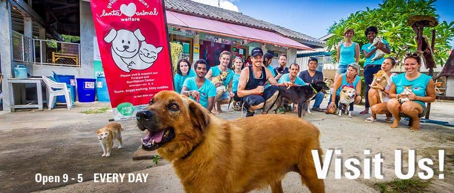 Volunteers at Lanta Animal Welfare