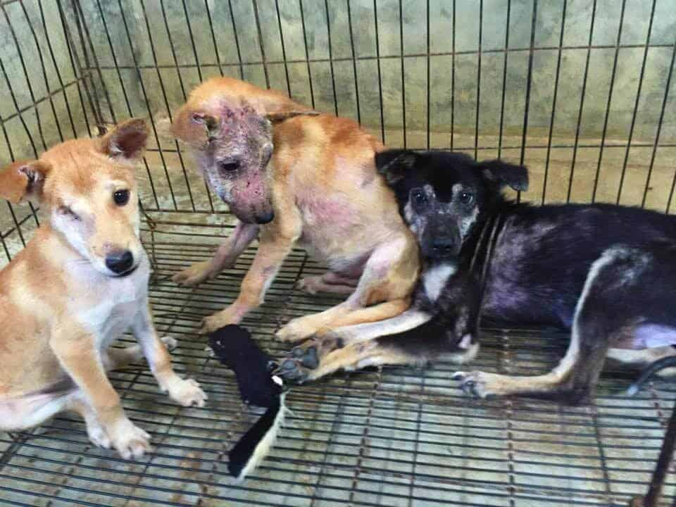Helping dogs at Lanta Animal Welfare