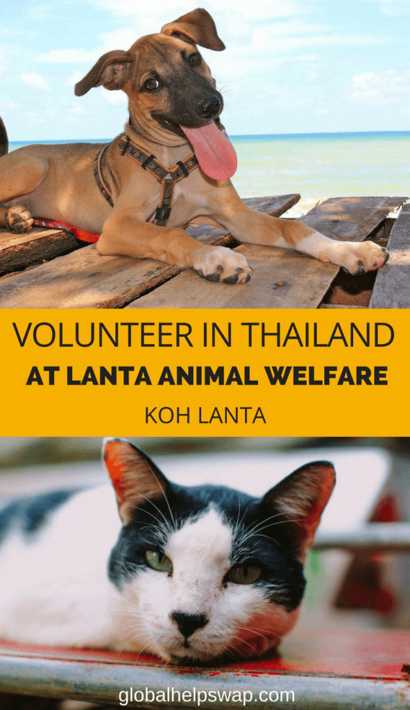 Volunteer at Lanta animal welfare and help street dogs and cats on the island of Koh Lanta, Thailand