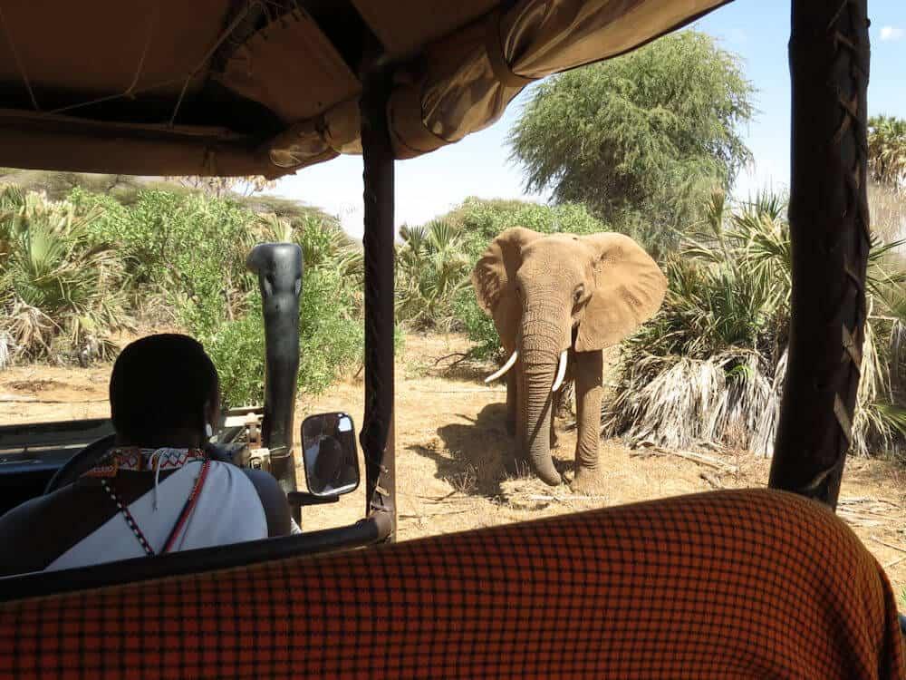On safari in Kenya, Africa