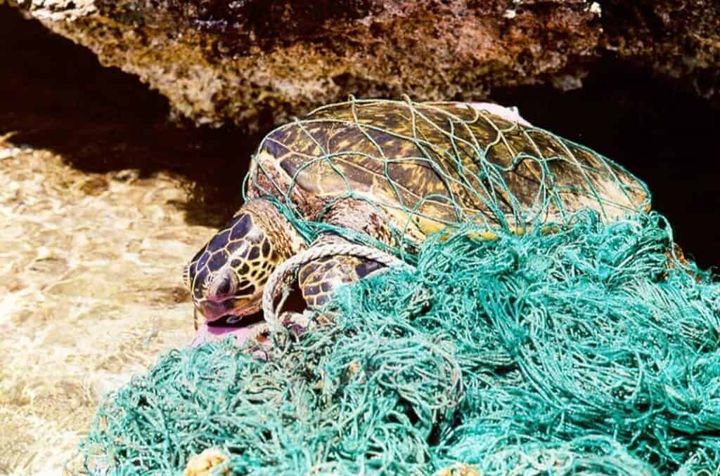 A turtle in debris