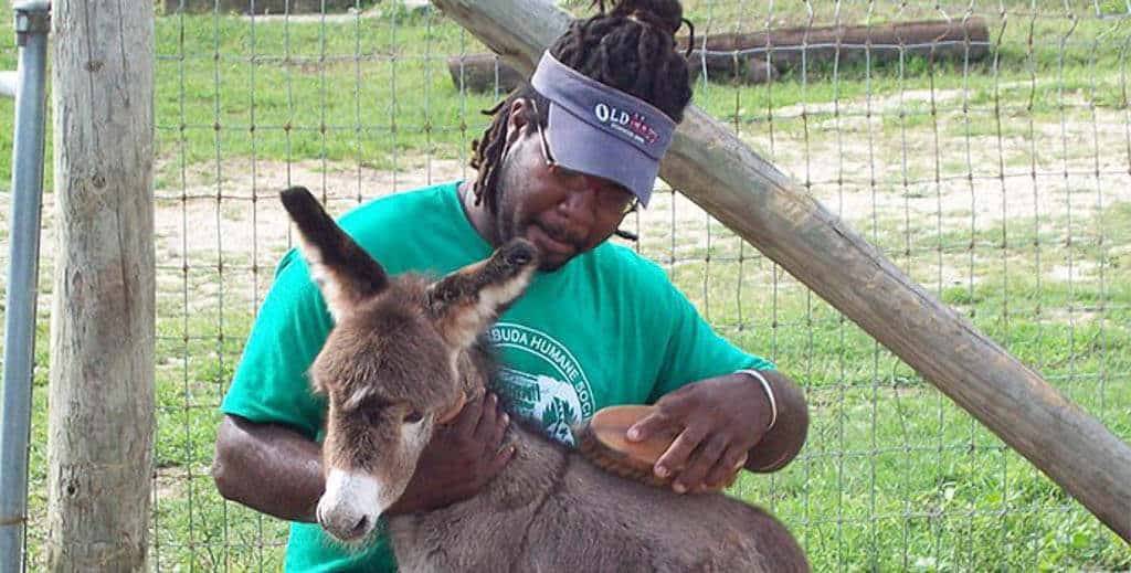 Donkey Sanctuary in Antigua