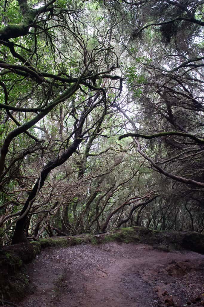 Anaga Rural Park, Tenerife