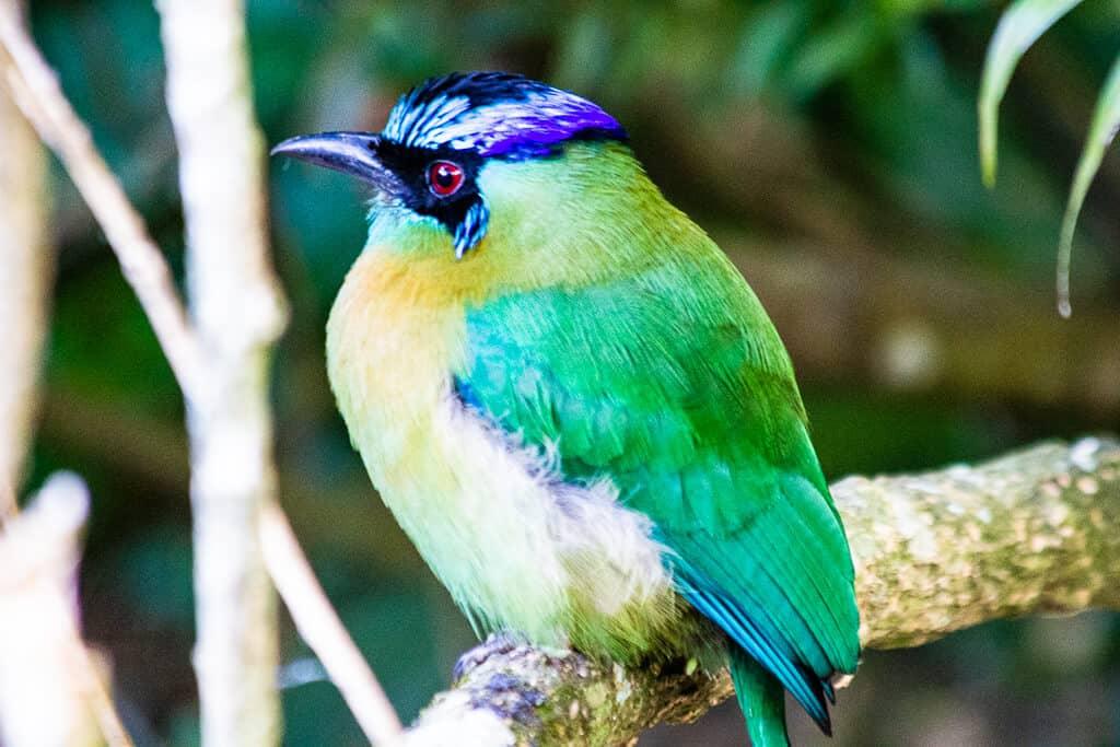 Reserva Biologica Bosque Nuboso Monteverde (Monteverde Cloud Forest Biological Reserve)