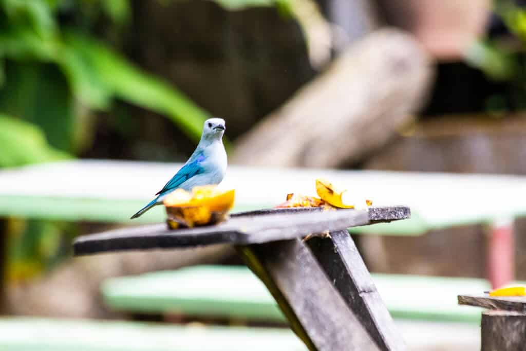 Monteverde Hiking