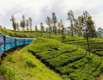 Negombo to Kandy by train