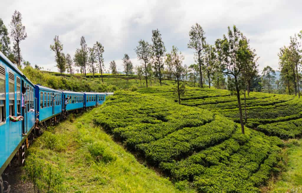 How To Travel From Negombo To Kandy