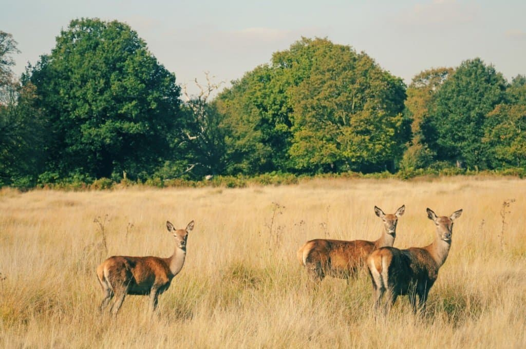 Richmond Park London
