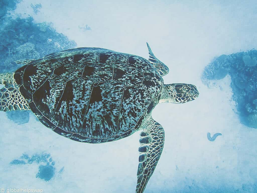 Protect the ocean's wildlife by diving in a responsible way.