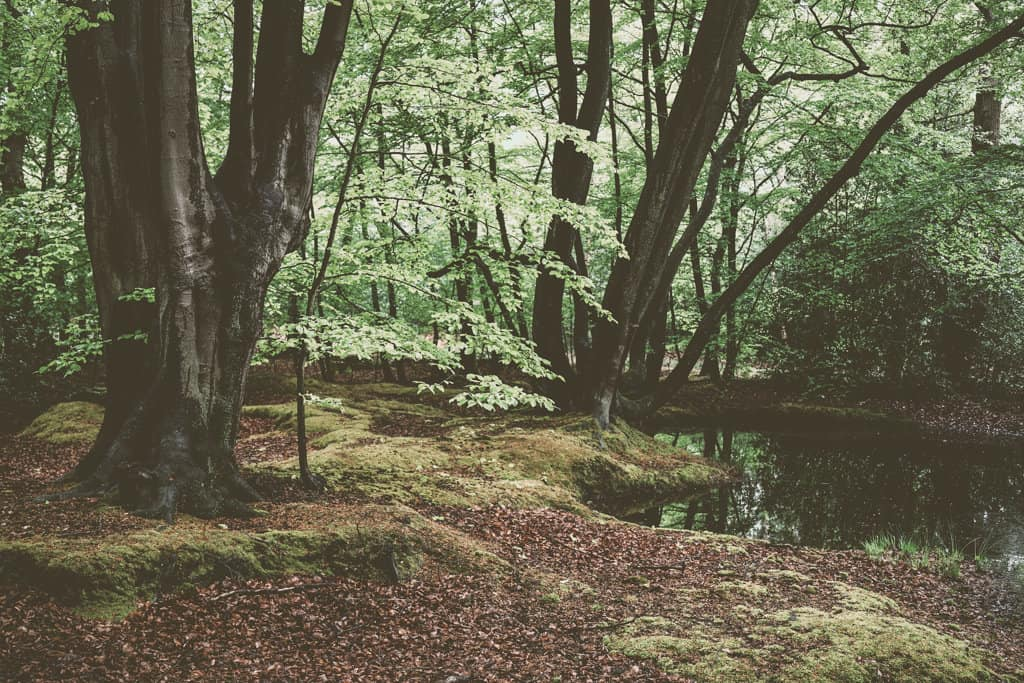 Things To Do In Epping Forest