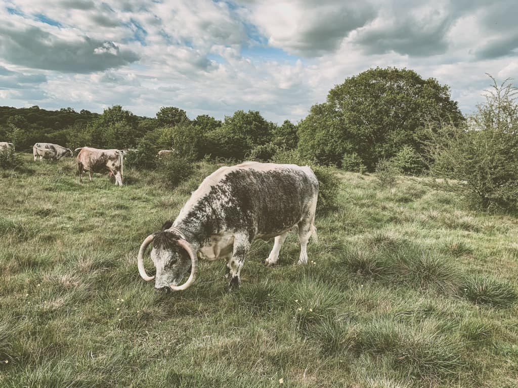 Wildlife and Nature in Epping Forest