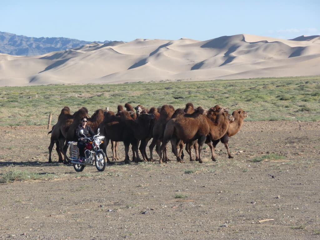 Our cool host rounding up the camels on her bike